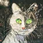 Burkett_Cat Eyes