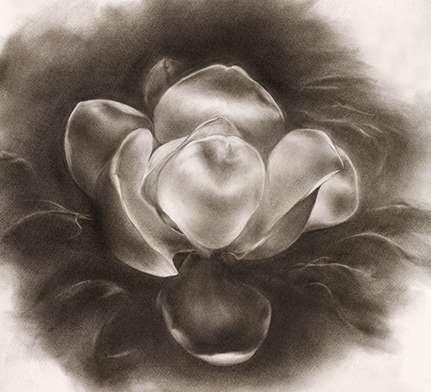 Artwork by Leslie Holland Magnolia