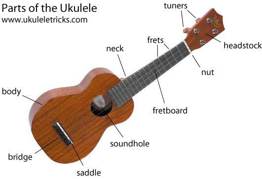 Ukulele Diagram