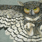 Nancy Charles - Great Horned Owl