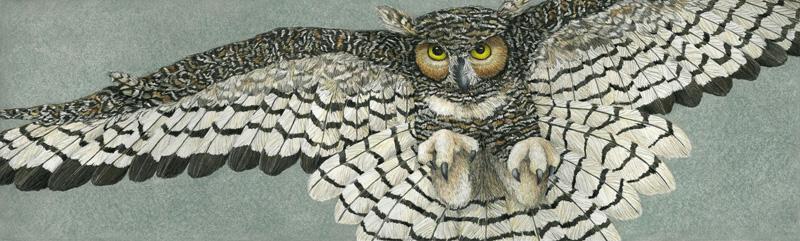 Nancy Charles - Great Horned Owl