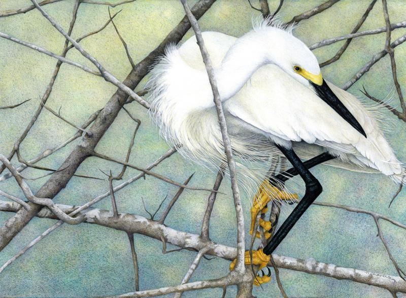 Nancy Charles - Snowy Egret