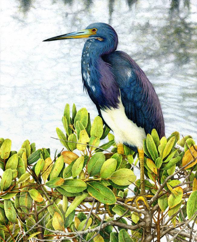 Nancy Charles - Tri-Color Heron