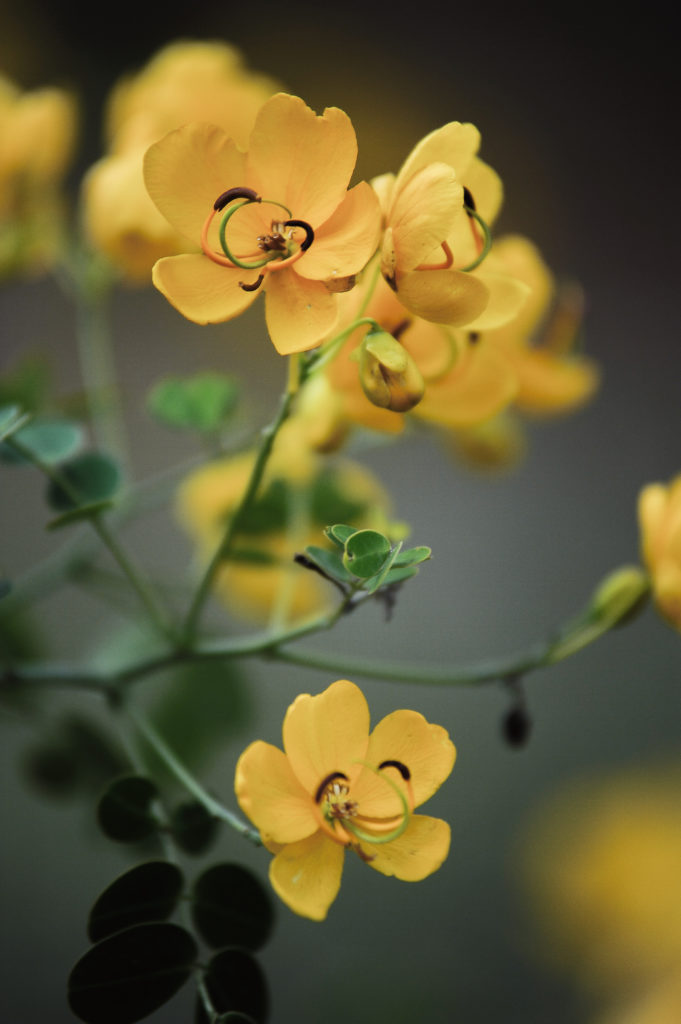 Kathy Tubbs - DSLR - Yellow Flowers