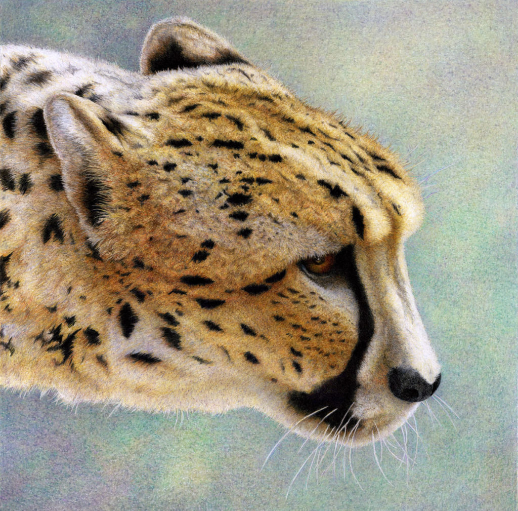 Nancy Charles - Workshop - Cheetah