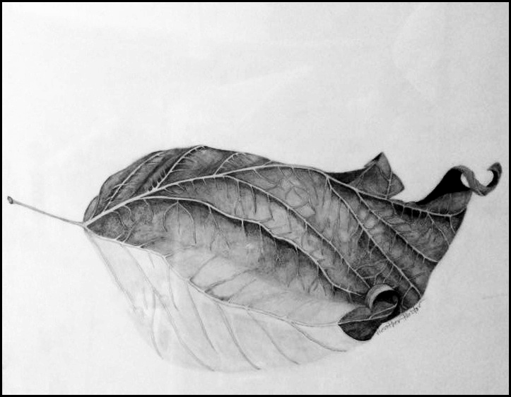 leaf drawing - Heather Pastor