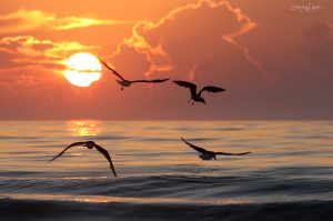 Shelley Lynch Seagull Sunrise