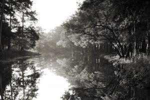Photography Exhibition - November - Jeff Thambert - Song of Cypress