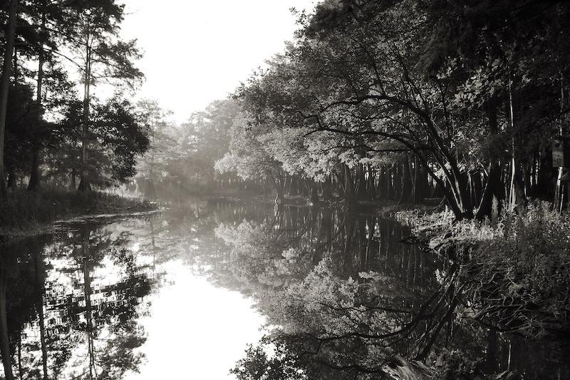 Photography Exhibition - November - Jeff Thambert - Song of Cypress