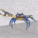 Blue Crab 11x14