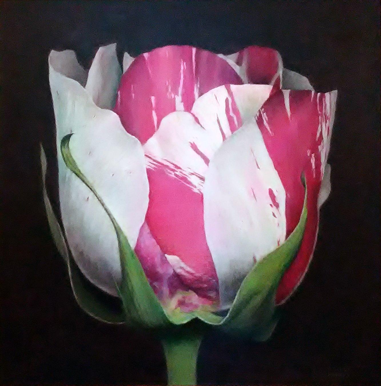 Tulip2frameless
